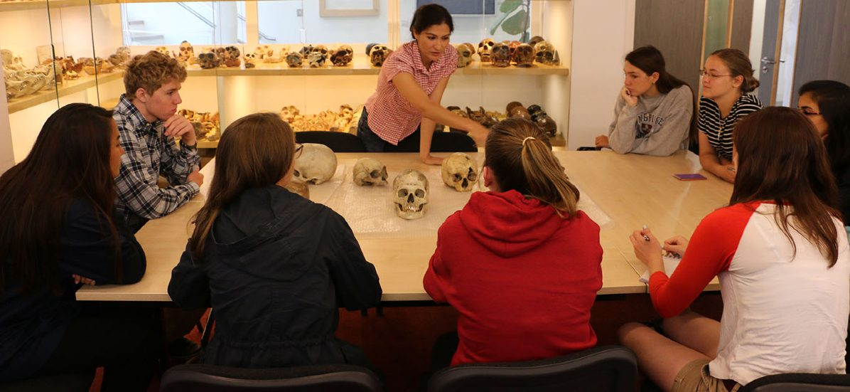 Students during Medicine and the Brain course observing human skulls