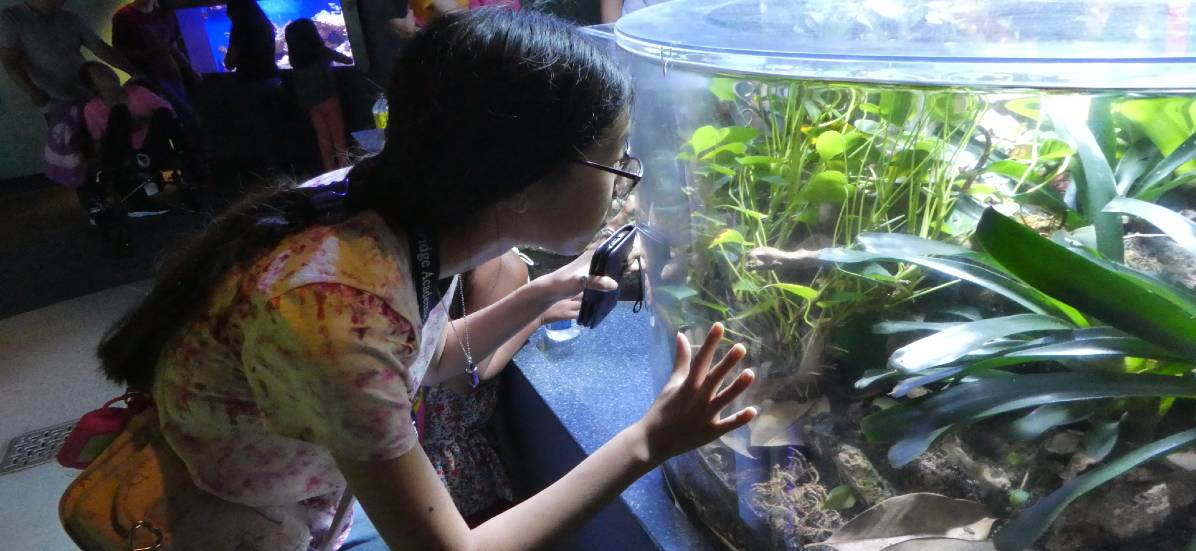 Students stares at tank in the California Science Center, LA